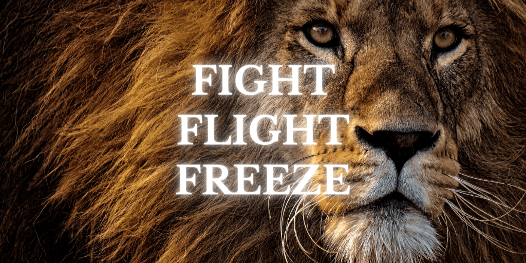 Fight Flight Freeze